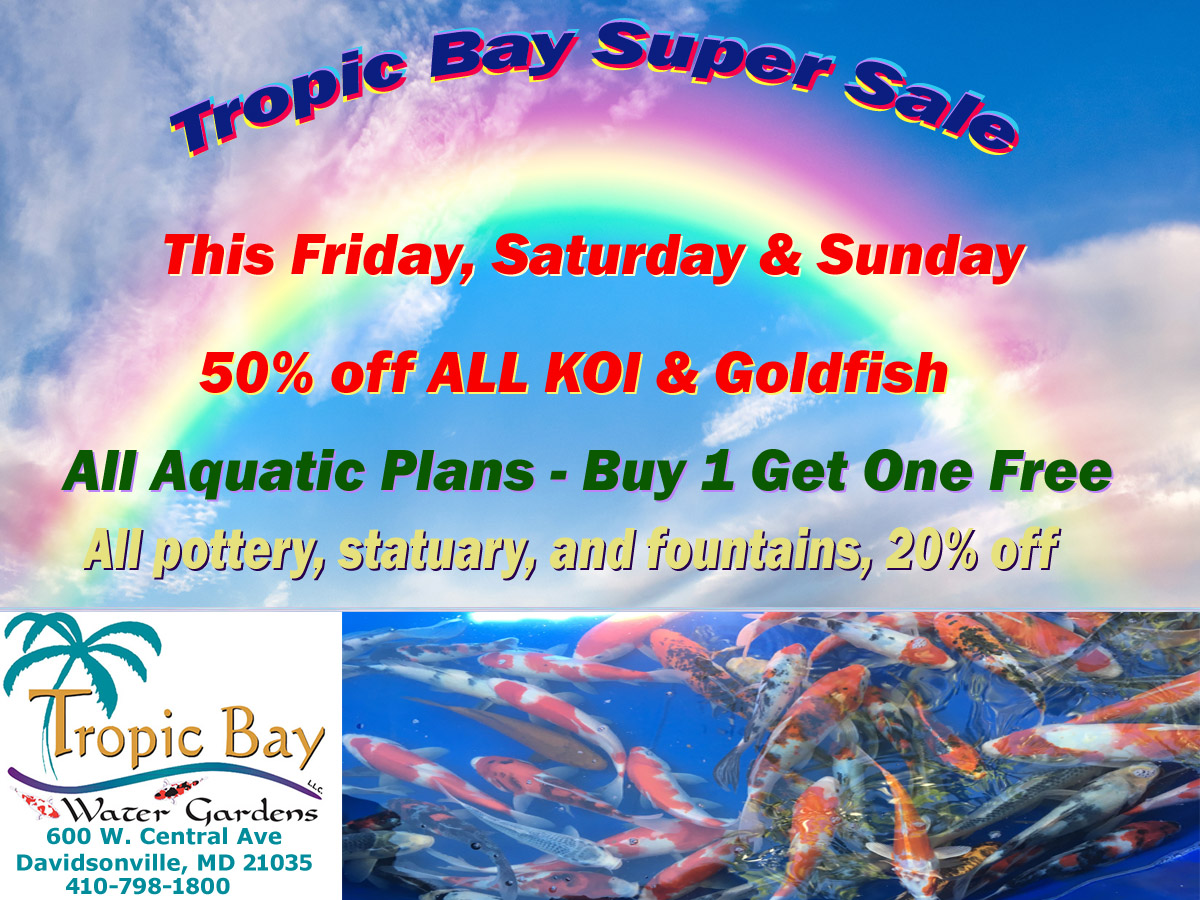Super Koi Sale Starting Today
